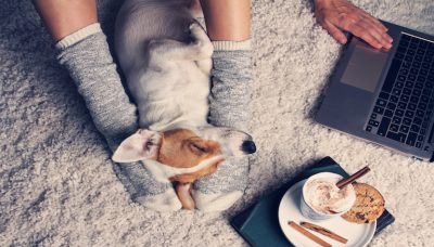 Can You Make Money Dog Sitting- You Might Be Surprised